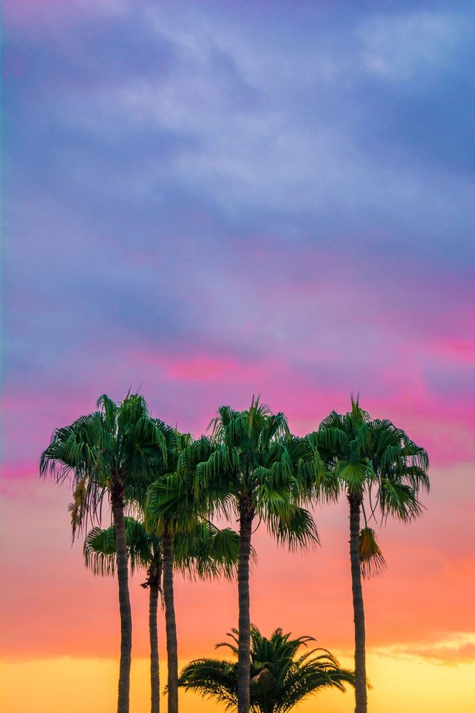 palm trees colors colorful