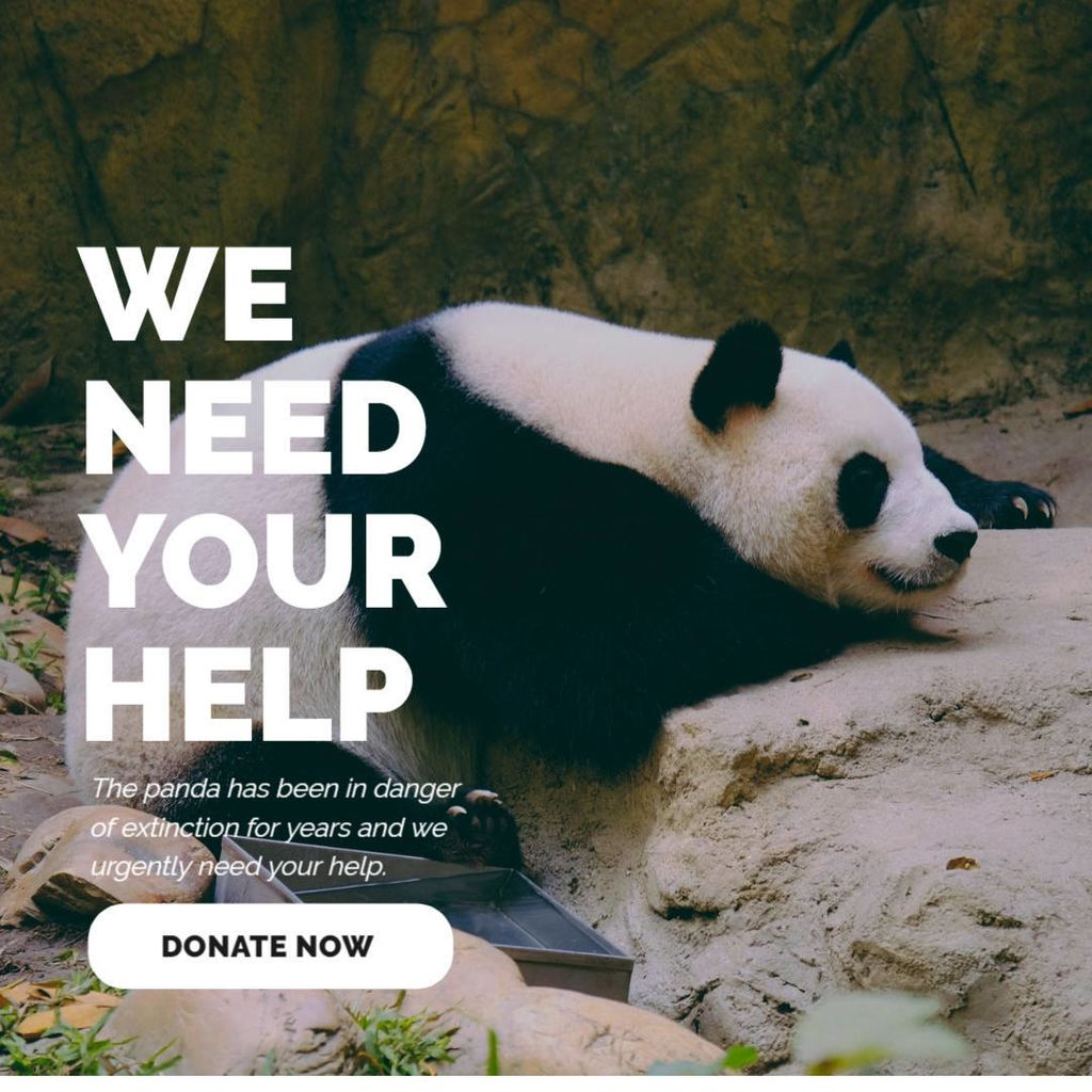 animals ngo template