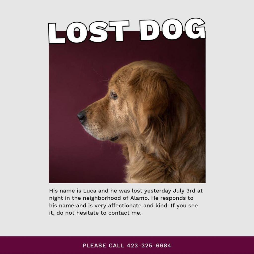 cartel perro perdido 2