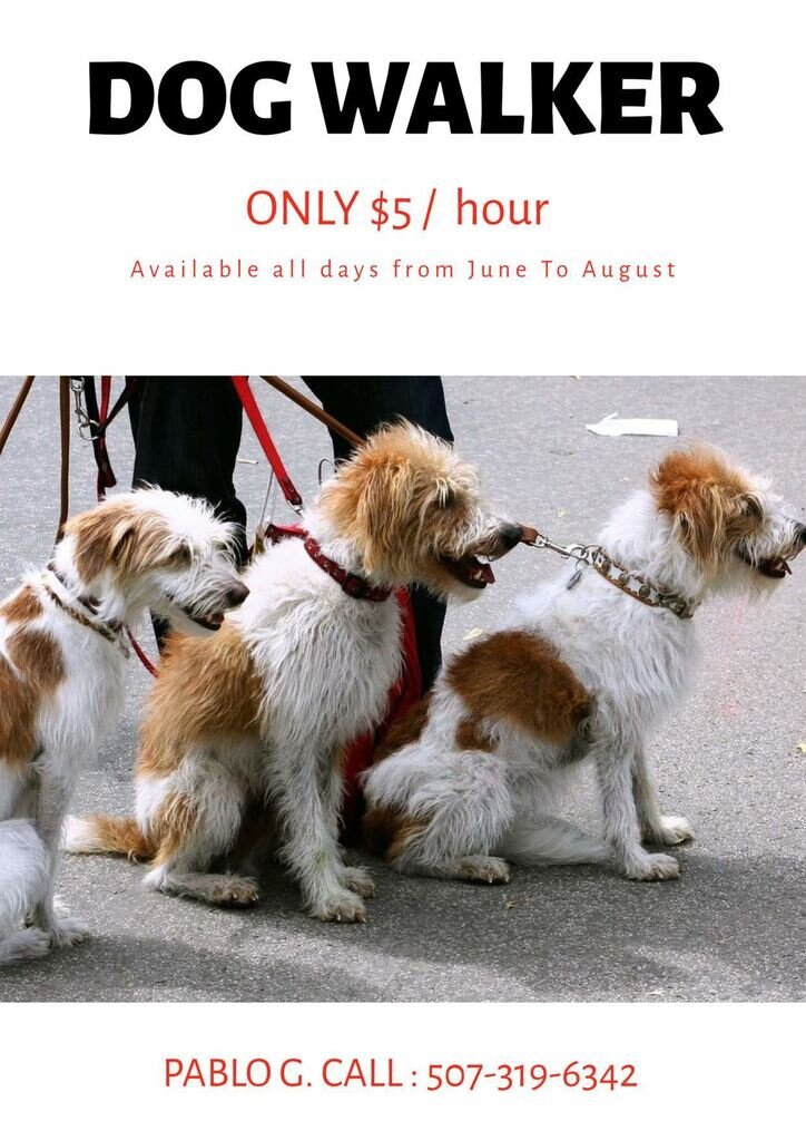 designs to advertising your dog walker business